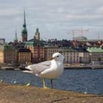 Бюджетный круиз по Балтийскому морю