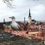 Путешествие из Хельсинки в Таллинн на автомобиле