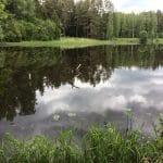 Бесплатный отдых в Эстонии на природе